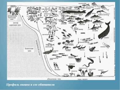 Профиль океана и его обитатели