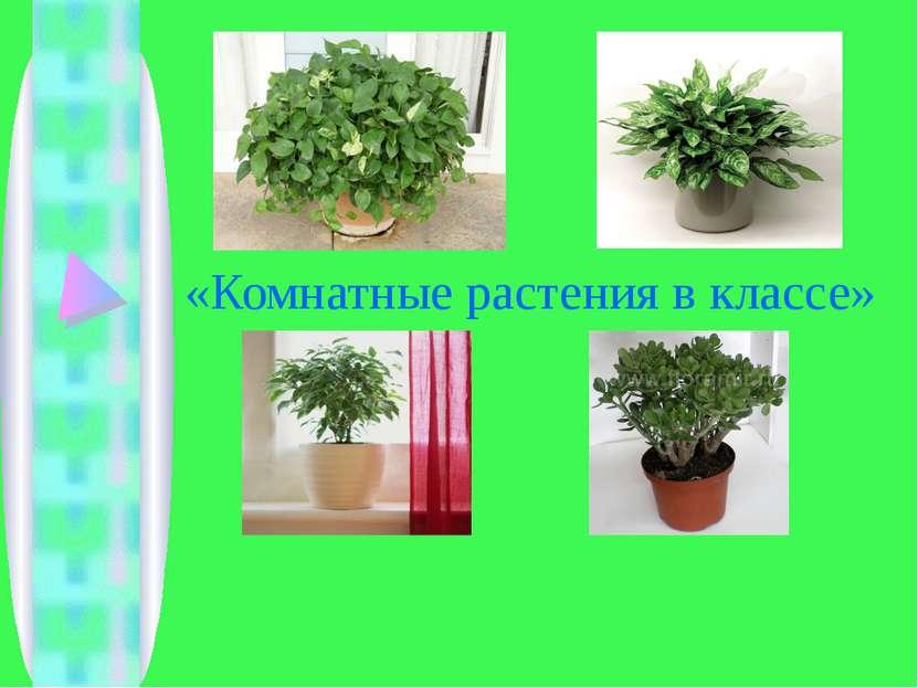 «Комнатные растения в классе»