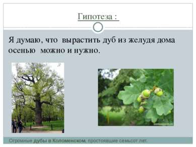 Гипотеза : Я думаю, что вырастить дуб из желудя дома осенью можно и нужно. Ог...