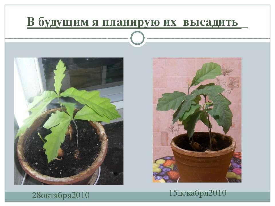 В будущим я планирую их высадить 15декабря2010 28октября2010