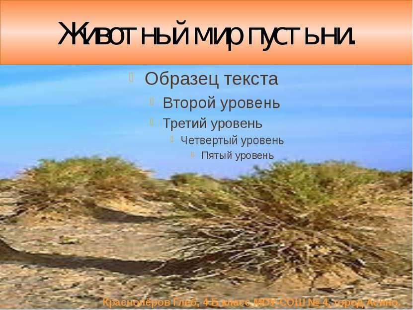 Животный мир пустыни. Краснопёров Глеб, 4 Б класс МОУ-СОШ № 4, город Асино.