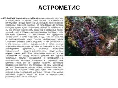 АСТРОМЕТИС АСТРОМЕТИС (Astrometis sertulifera) предпочитающая селиться в защи...