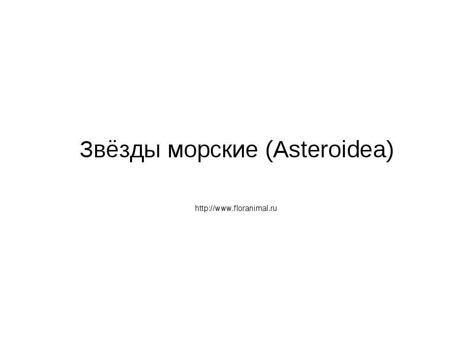 Звёзды морские (Asteroidea) http://www.floranimal.ru