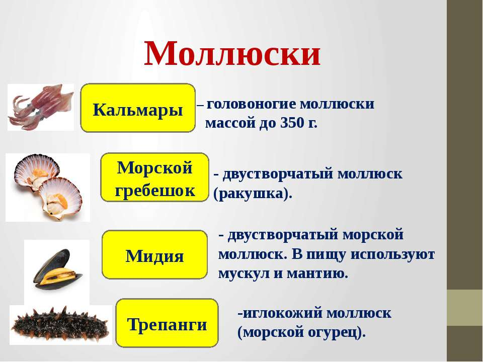 – головоногие моллюски массой до 350 г. Моллюски Кальмары Морской гребешок Ми...