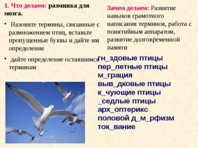 гн_здовые птицы пер_летные птицы м_грация выв_дковые птицы к_чующие птицы _се...