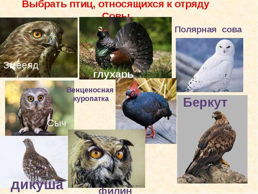 Выбрать птиц, относящихся к отряду Совы глухарь дикуша Сыч филин Полярная сов...