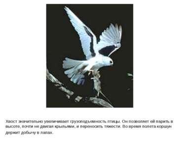 Хвост значительно увеличивает грузоподъемность птицы. Он позволяет ей парить ...