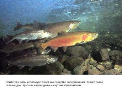 Обитатели воды используют хвост как средство передвижения. Только рыбы, салам...