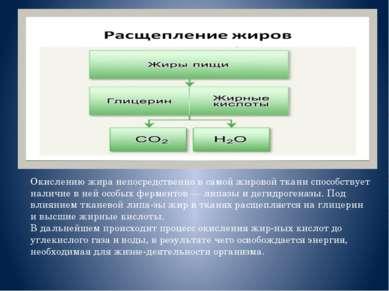 Окислению жира непосредственно в самой жировой ткани способствует наличие в н...