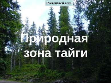 Тайга Природная зона тайги