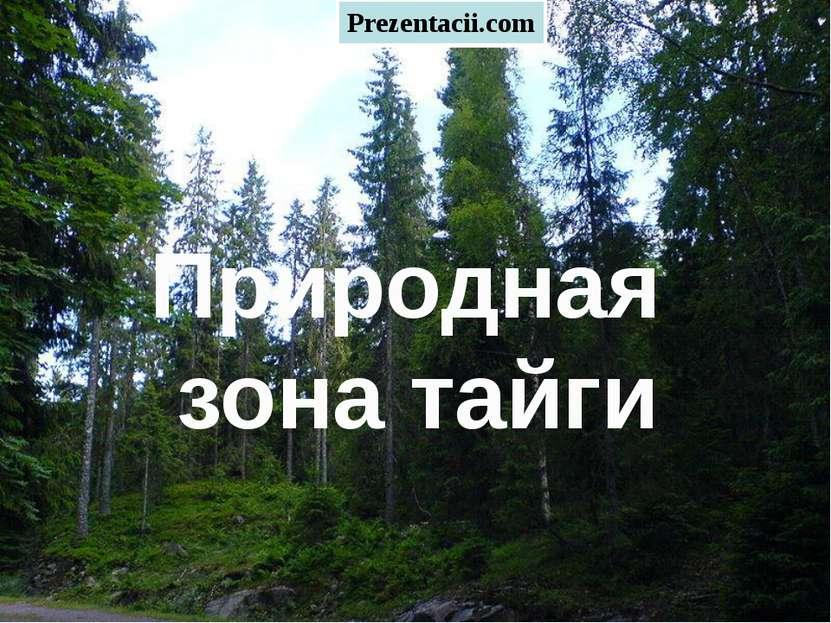 Тайга Природная зона тайги Prezentacii.com