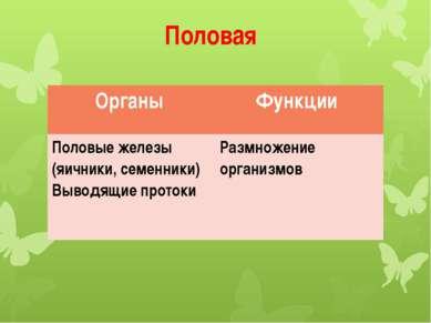 Половая Органы Функции Половые железы (яичники, семенники) Выводящие протоки ...
