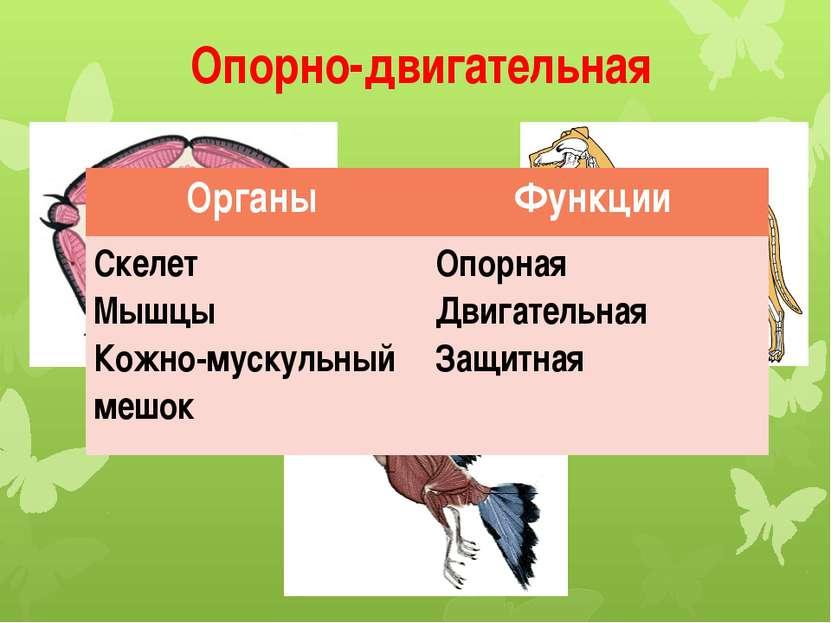 Опорно-двигательная Органы Функции Скелет Мышцы Кожно-мускульный мешок Опорна...