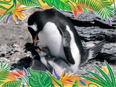 Самый быстрый пловец- папуанский пингвин. скорость 27 км/ч.