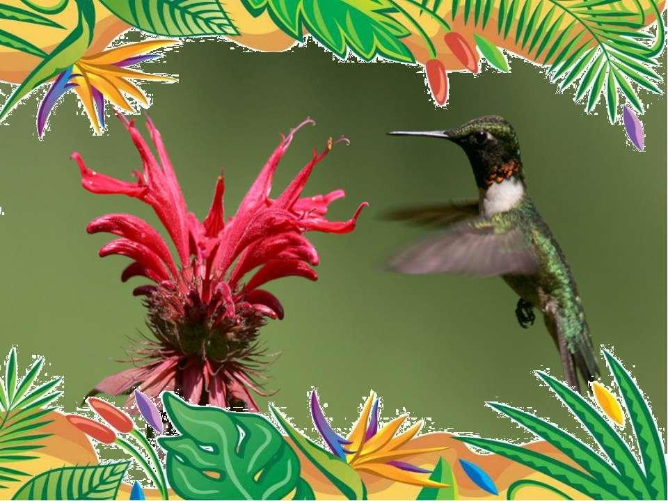 Самая маленькая птица- колибри-пчёлка. весят 1,6 г, длина равна 5,7 см. птич...