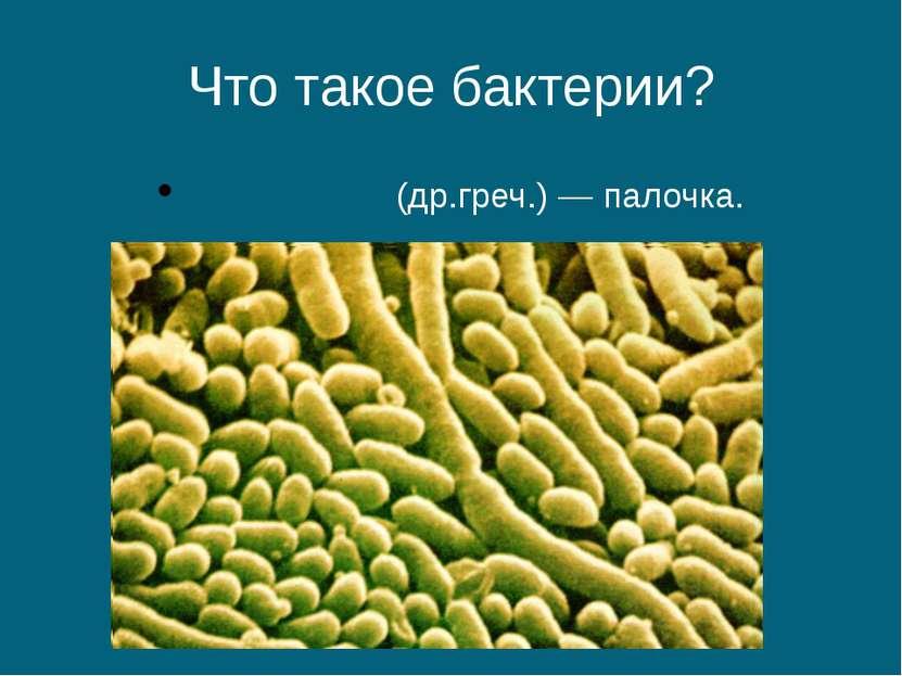 Что такое бактерии? βακτήριον (др.греч.) — палочка.