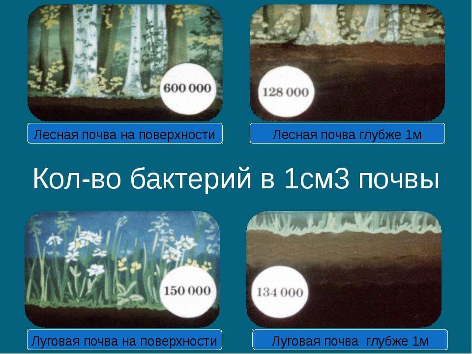 Кол-во бактерий в 1см3 почвы Лесная почва на поверхности Лесная почва глубже ...