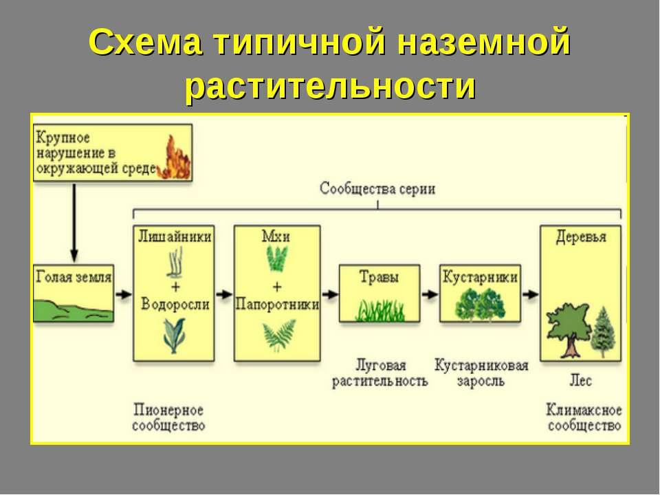 Схема типичной наземной растительности