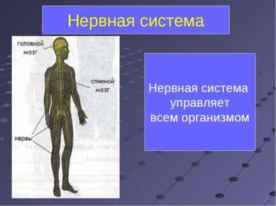 Нервная система управляет всем организмом Нервная система