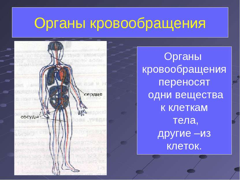 Органы кровообращения Органы кровообращения переносят одни вещества к клеткам...