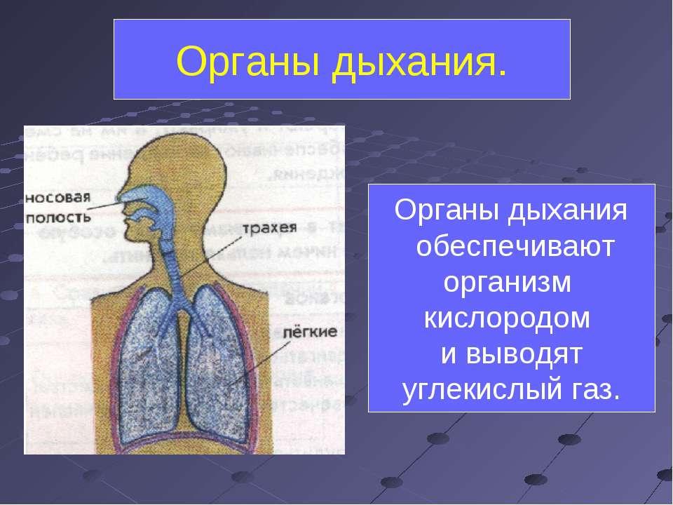 Органы дыхания. Органы дыхания обеспечивают организм кислородом и выводят угл...