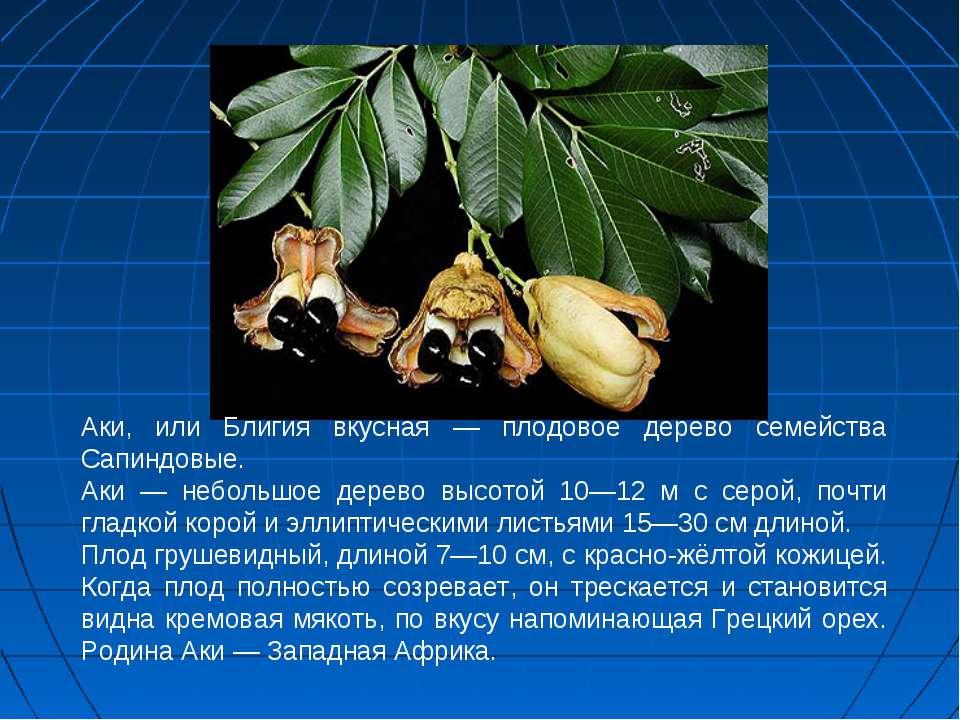 Аки, или Блигия вкусная — плодовое дерево семейства Сапиндовые. Аки — небольш...