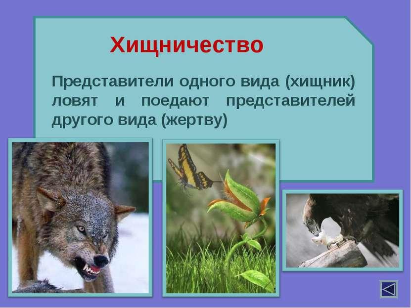 Представители одного вида (хищник) ловят и поедают представителей другого вид...