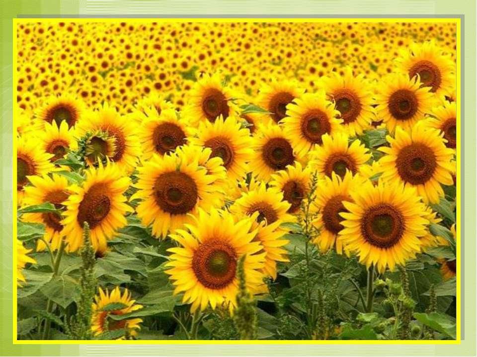 ЖЁЛТЫЙ как символ солнца, снимает напряжения и даёт надежду. Он действует поз...