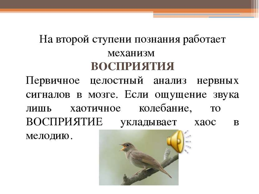 На второй ступени познания работает механизм ВОСПРИЯТИЯ Первичное целостный а...