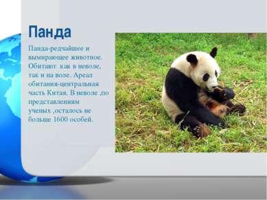 Панда-редчайшее и вымирающее животное. Обитают как в неволе, так и на воле. А...