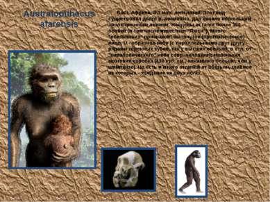 Australopithecus afarensis Вост. Африка, 4-3 млн. лет назад. Этот вид существ...