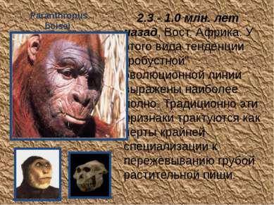 Paranthropus boisei 2.3 - 1.0 млн. лет назад, Вост. Африка. У этого вида тен...