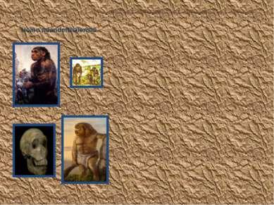 Homo neanderthalensis Неандертальцы населяли Европу и Зап. Азию (от Испании д...