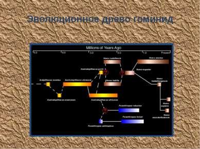 Эволюционное древо гоминид