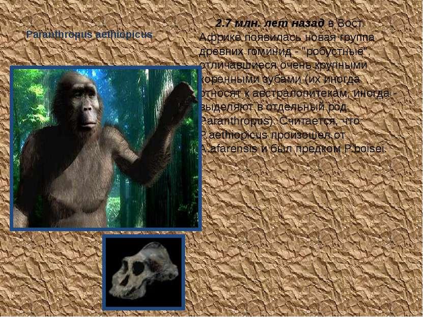 Paranthropus aethiopicus 2.7 млн. лет назад в Вост. Африке появилась новая г...