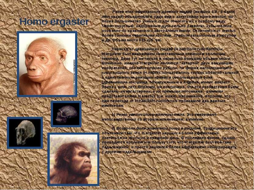 Homo ergaster Ранее этих африканских древних людей (живших 1.9 - 1.6 млн. лет...