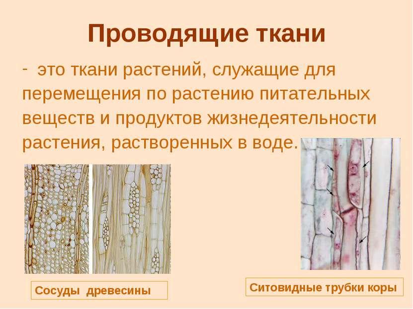 Проводящие ткани это ткани растений, служащие для перемещения по растению пит...