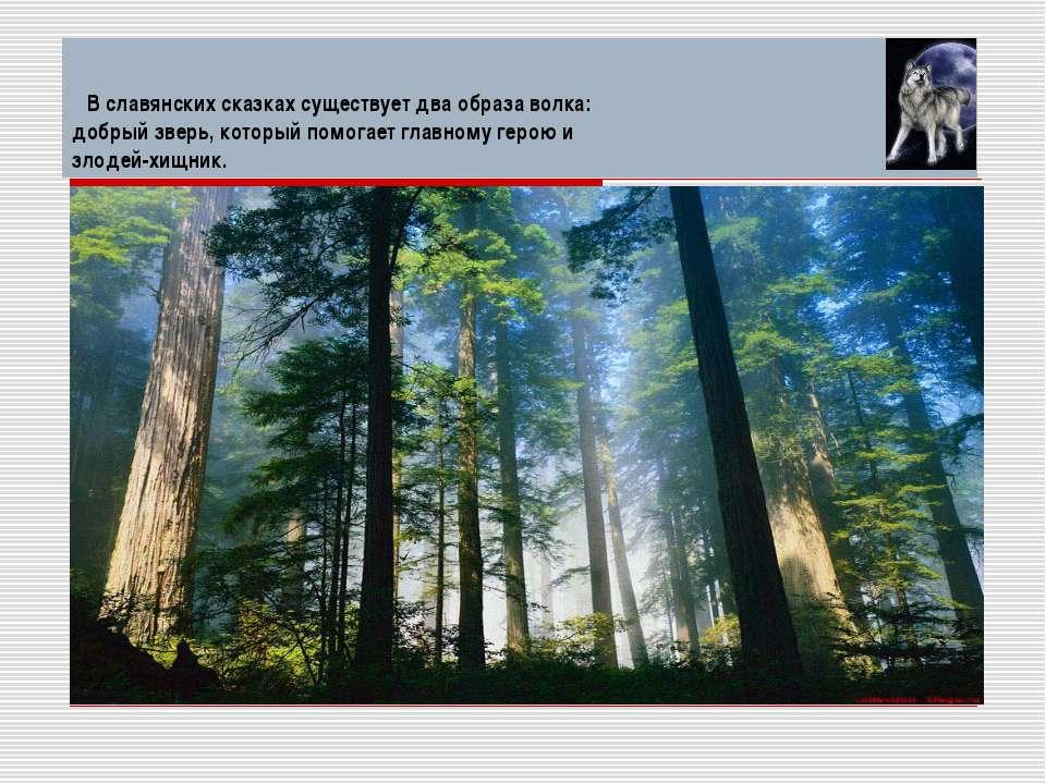 В славянских сказках существует два образа волка: добрый зверь, который помог...
