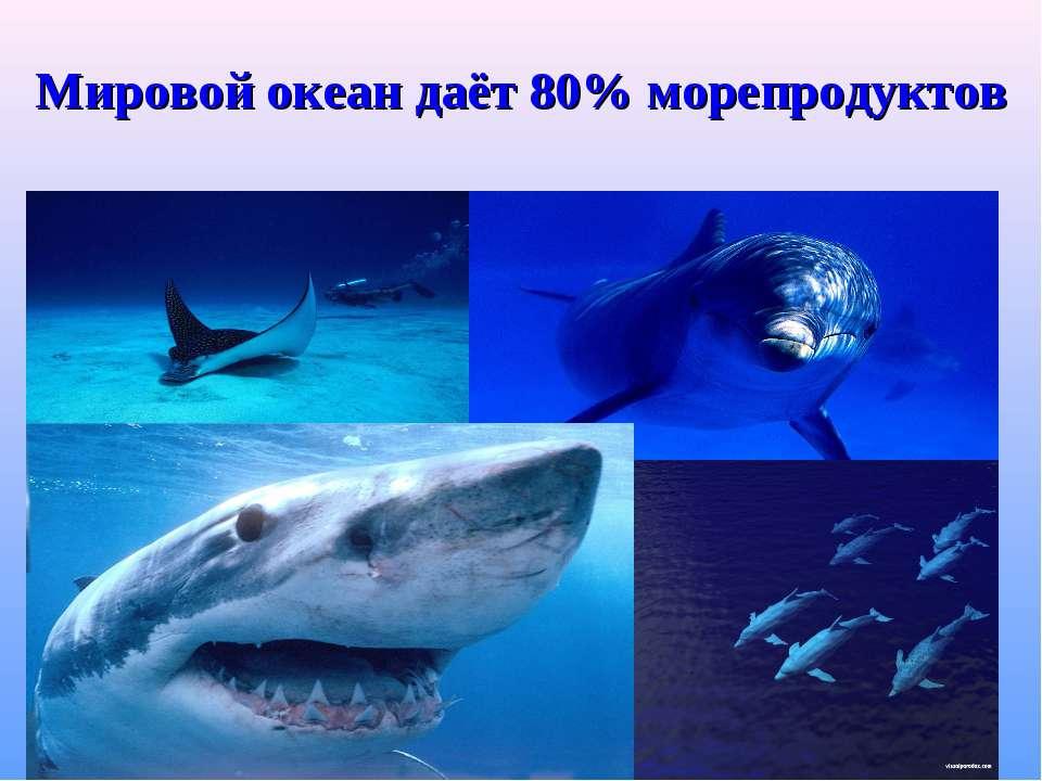 Мировой океан даёт 80% морепродуктов