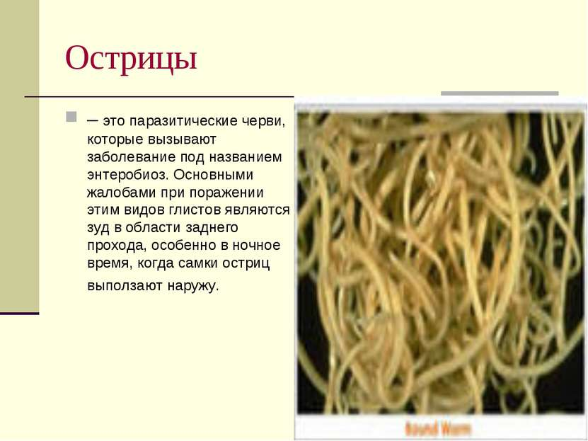 Острицы – это паразитические черви, которые вызывают заболевание под название...