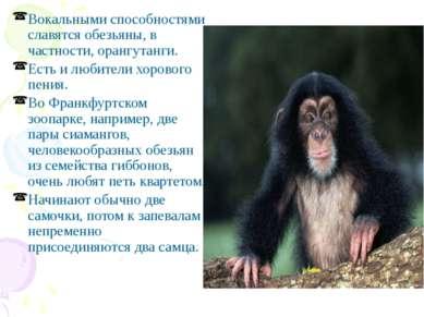 Вокальными способностями славятся обезьяны, в частности, орангутанги. Есть и ...