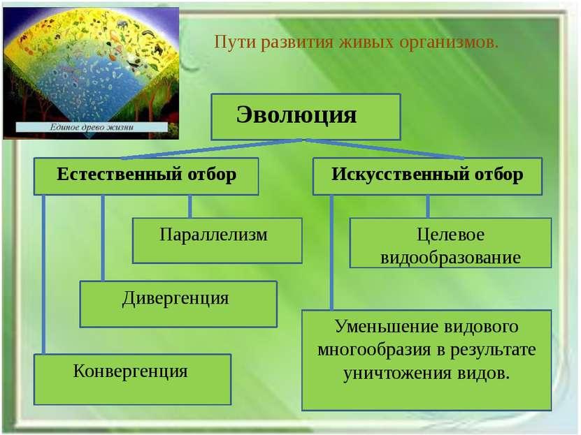 Пути развития живых организмов. Уменьшение видового многообразия в результате...