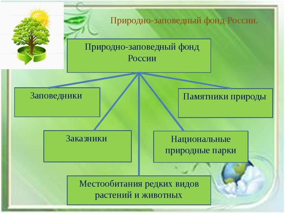 Природно-заповедный фонд России. Природно-заповедный фонд России Заповедники ...
