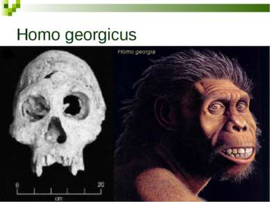 Homo georgicus