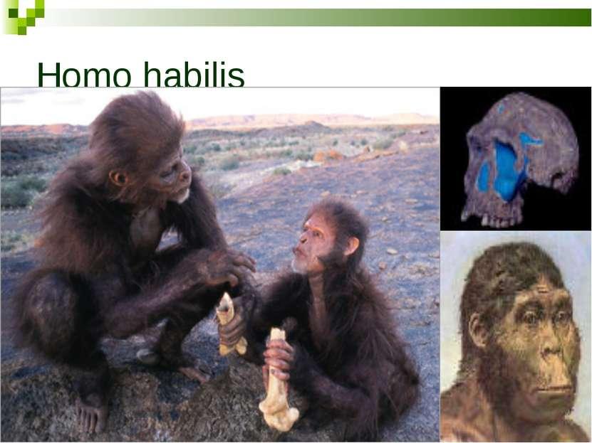 Появление и развитие человека теория 1 классическая человек произошел естественным путем от человекообразных