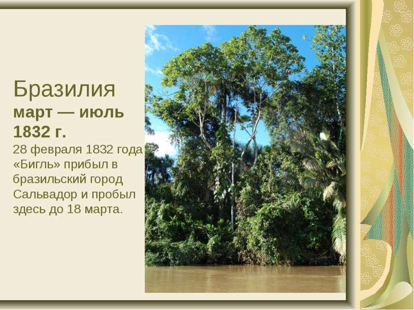 Бразилия март — июль 1832 г. 28 февраля 1832 года «Бигль» прибыл в бразильски...