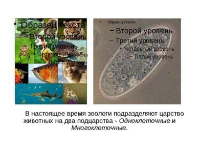 В настоящее время зоологи подразделяют царство животных на два подцарства - О...