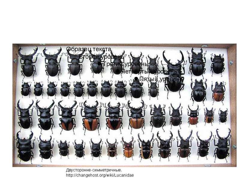 Двусторонне-симметричные. http://changehost.org/wiki/Lucanidae