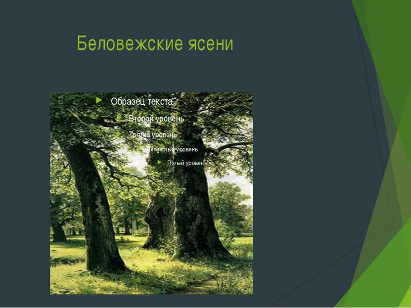 Беловежские ясени