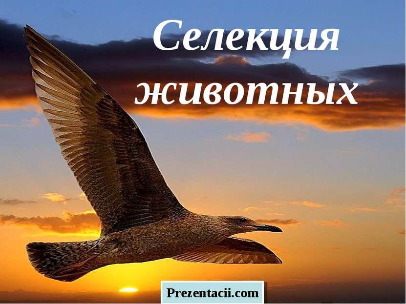 Селекция животных Prezentacii.com